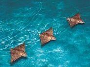 ZF2AM Cayman Islands CQ WW 160m SSB Contest 2010