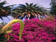 CQ3L Madeira Island