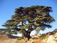 OD5/DL6SN Ливан