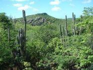 PJ4/K4BAI Bonaire Island
