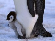 R1ANP Antarctica