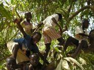 C5YK Гамбия