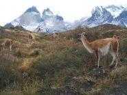 CE1A Chile