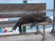 Галапагосские Острова HC8A