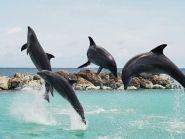 Curacao Island PJ2T ARRL SSB 2011
