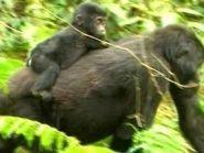 Уганда 5X1NH 2011