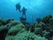 PJ4/N4RR PJ4R Bonaire