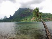 FO/K8AQM Moorea Island