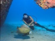 Aruba P49X WPX RTTY 2011