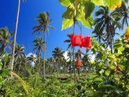 Остров Тонгатапу A35IR A35AD