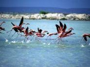 PJ4A PJ4/K4BAI PJ4/KU8E PJ4/W4EF Bonaire Island