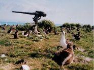 KH4/W5FJG Midway Atoll