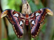 Madagascar 5R8UO 2011