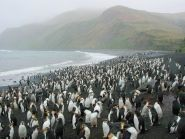 VK0TH Macquarie Island