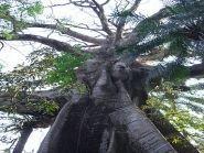 Банановый Остров Сьерра Леоне 9L0W