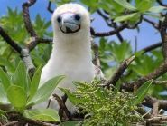 VK9XM Christmas Island