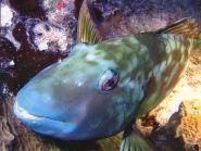 PJ7N Sint Maarten Island