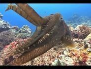 Palau Islands T88SM 2012