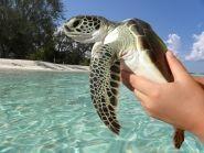 Cayman Islands ZF2AM 2012