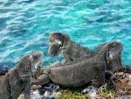 Bonaire Island PJ4B PA8A