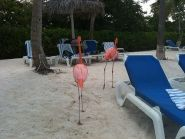 P40S Aruba Island