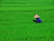 Vietnam XV2RZ 2012