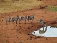 Kenya 5Z4EE WW RTTY 2012