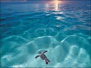 Ascension Island ZD8W WW CW 2012