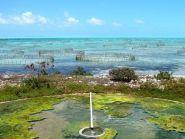 VP5/KX4WW VP5/W9RN Turks and Caicos Islands