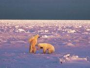 JW2US Bear Island