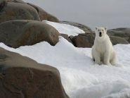 JW9HH JW8DW Svalbard Islands