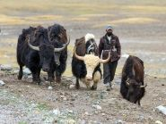Tajikistan EY0A WW RTTY 2012