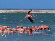 Bonaire Island PJ4D 2012