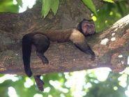FY/F5UII French Guiana