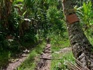 FO/UT6UD Hiva Oa Island Rurutu Island