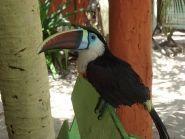 PX8Z Остров Котиджуба