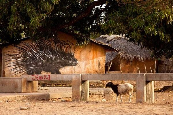 Gambia C5WP Tourist Attractions 2012