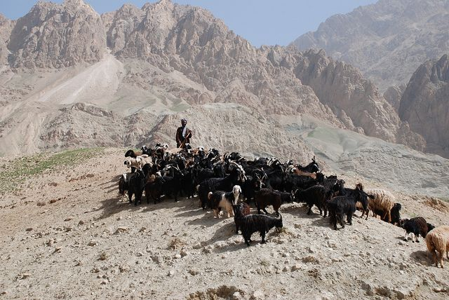 Afghanistan T6/ZS5ADU DX News