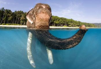 Андаманские Острова VU4PB Слон