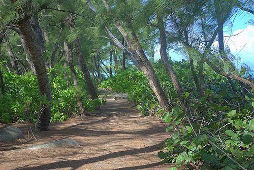 Andros Island Bahamas AF1G/C6A