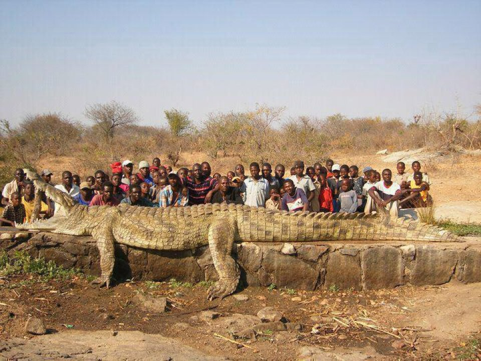 Angola D2QV Monster Crocodile