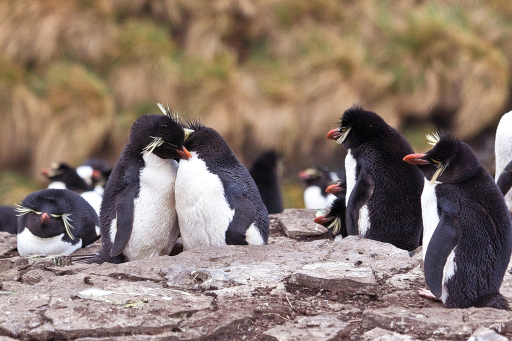 Antarctica RI1ANT DX News