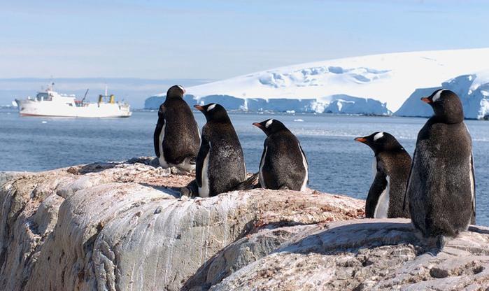 Antarctica ZS7V