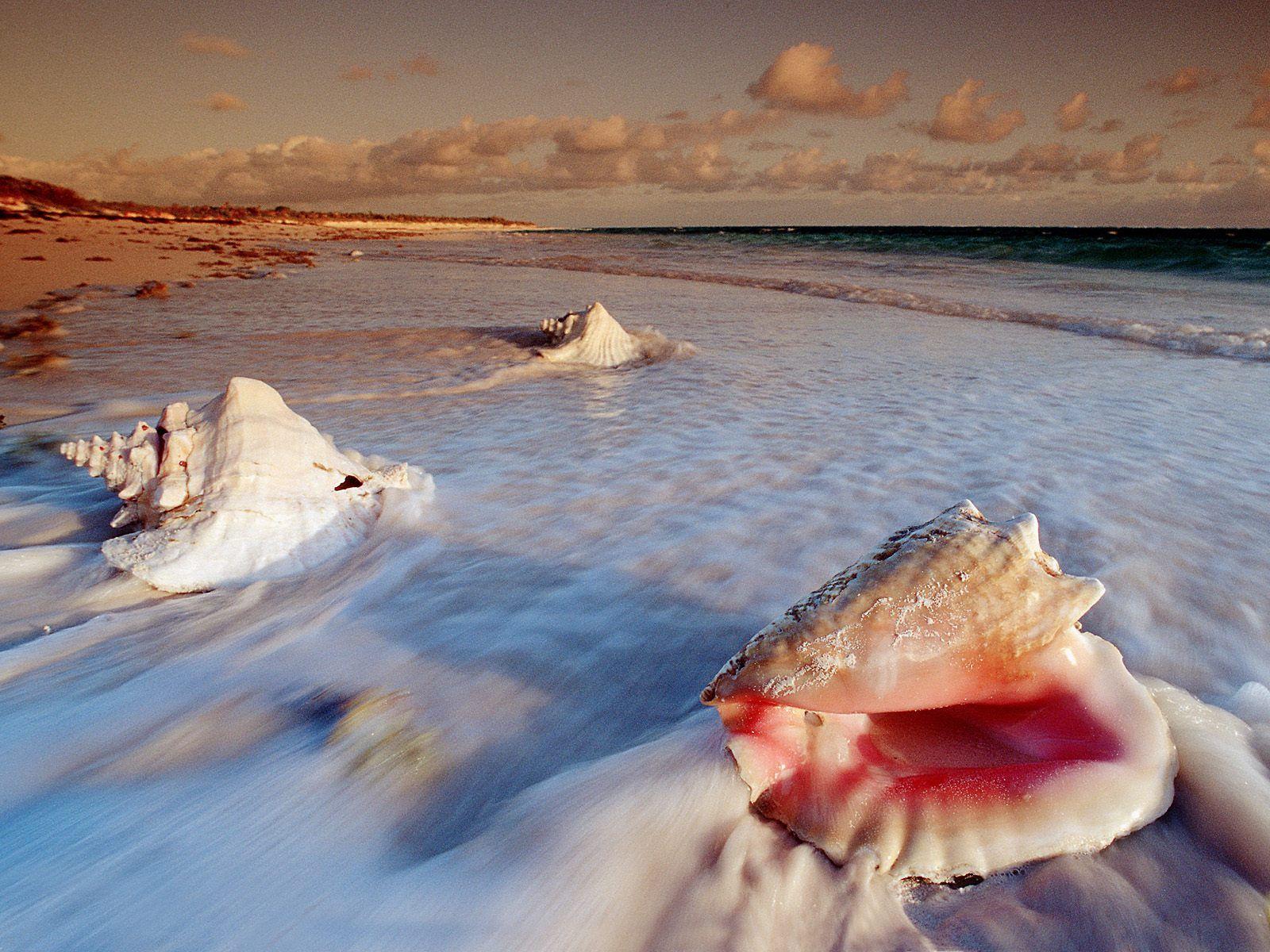 Aruba DX News P4/W1HEO