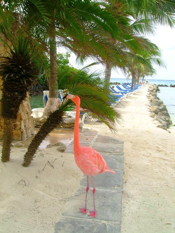 Aruba P4/JA3DFM DX News