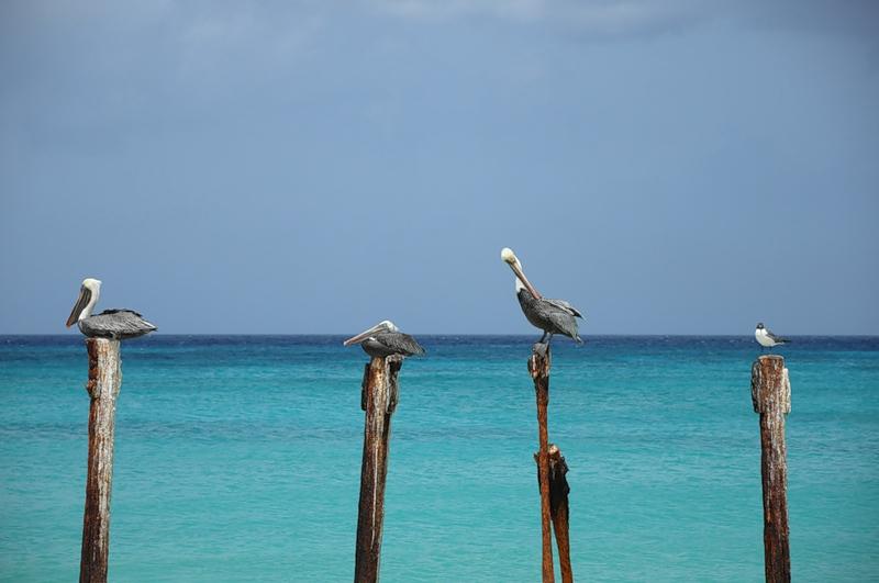 Aruba P40FM P40PB
