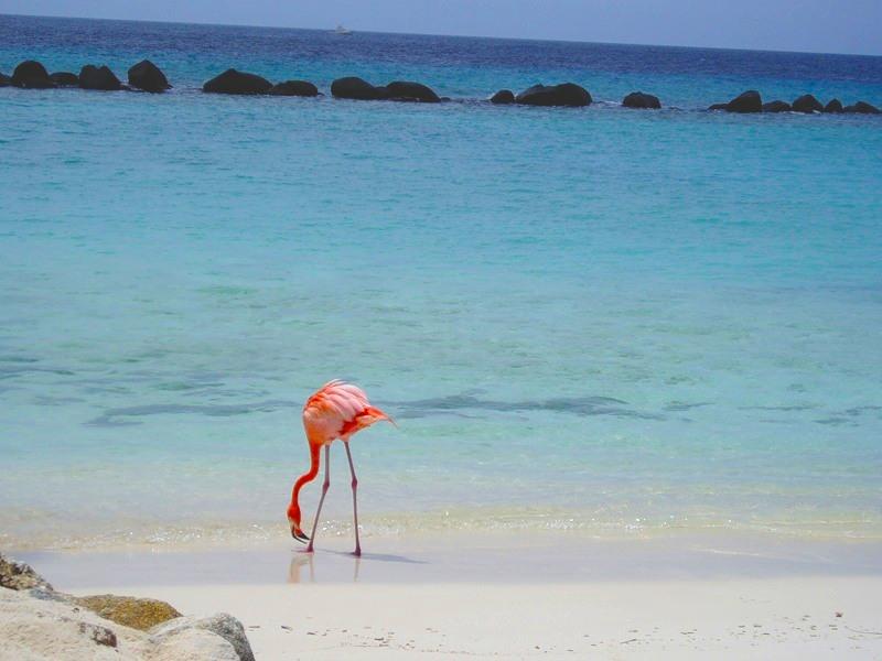 Aruba P40P 2011
