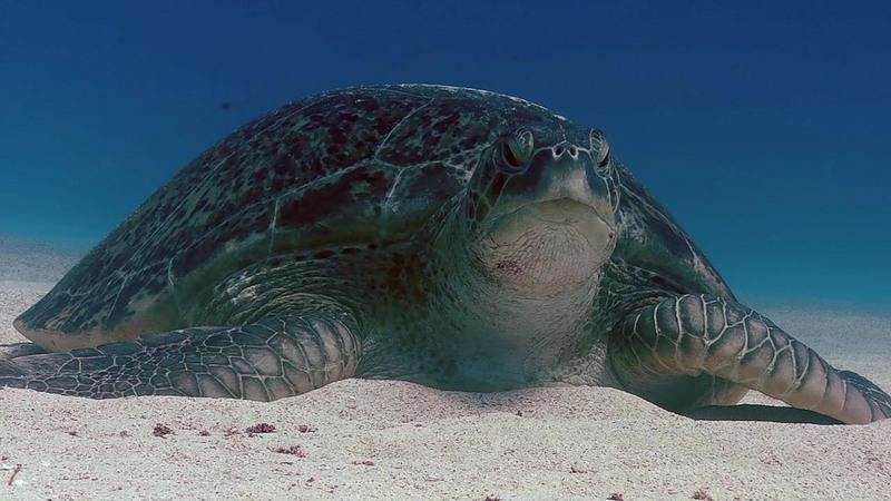 Ascension Island ZD8W
