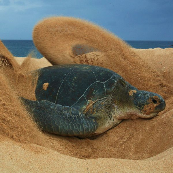 Ascension Island ZD8Z Tourist Attractions