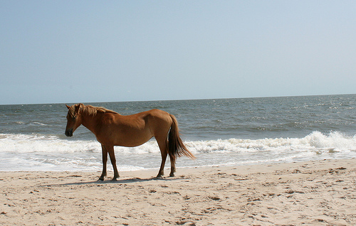 Assateague Island K3I